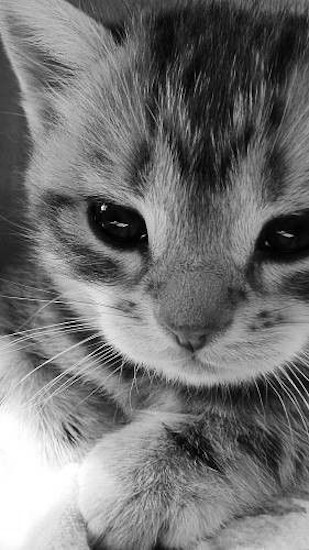 Cats profile pictures